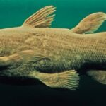 Which prehistoric fish is called as living fossils?